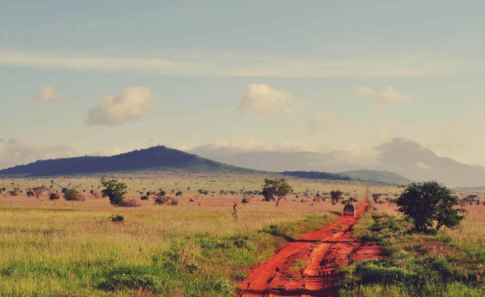 5 Safe Travel Tips for an Exciting Jungle Safari
