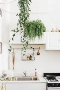 Houseplants are back as chic decor