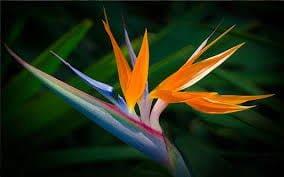 Transform Garden Exotic Escape