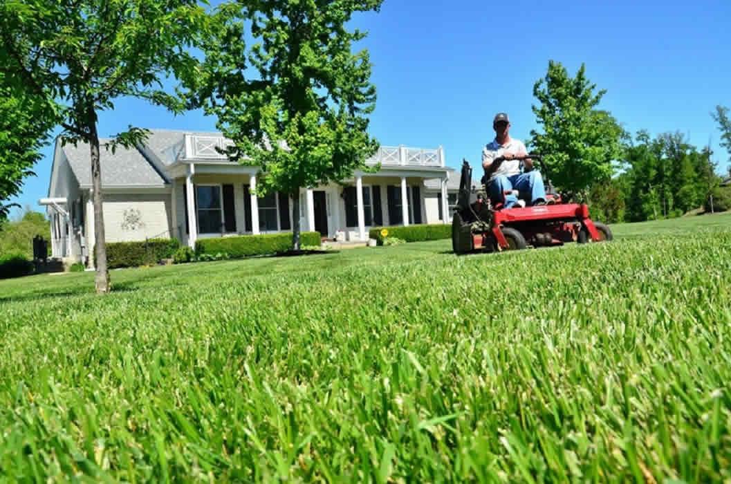 Top 8 Tips for Your Garden Maintenance