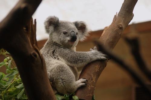 10 Australian Cities You Should Visit in 2020 - Brisbane